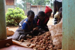 Mädchen hinter Kartoffelberg
