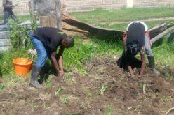 Der Garten wird neu bepflanzt.