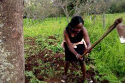 Eine kenianische Frau in einem schwarzen Kleid steht auf einem grünen Feld. In der Hand hält sie eine Hacke. Im Hintergrund ist die umgegrabene Erde zu sehen.