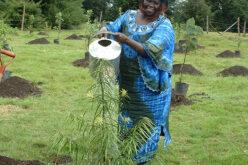 Wangari 2 1